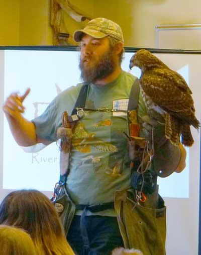 falconWeb